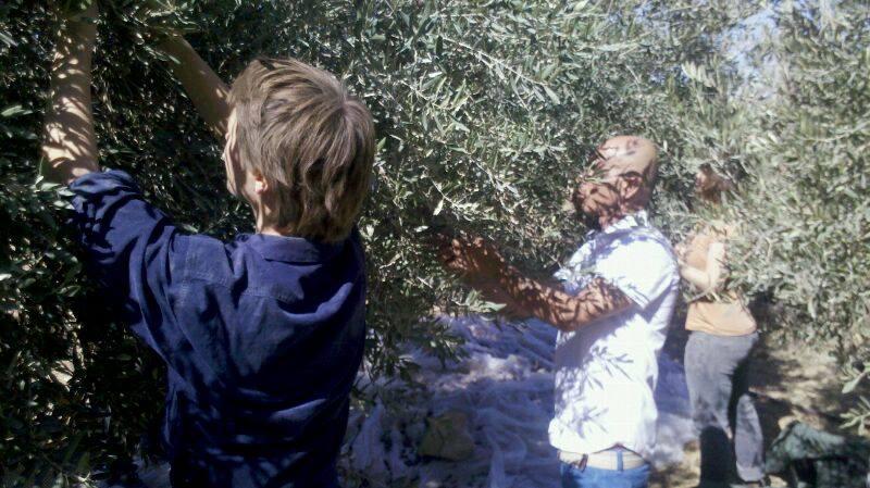 Olivrikolto ĉe Fahidatanaro